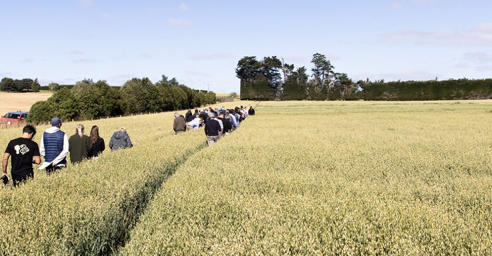 Our Southland Oats Image